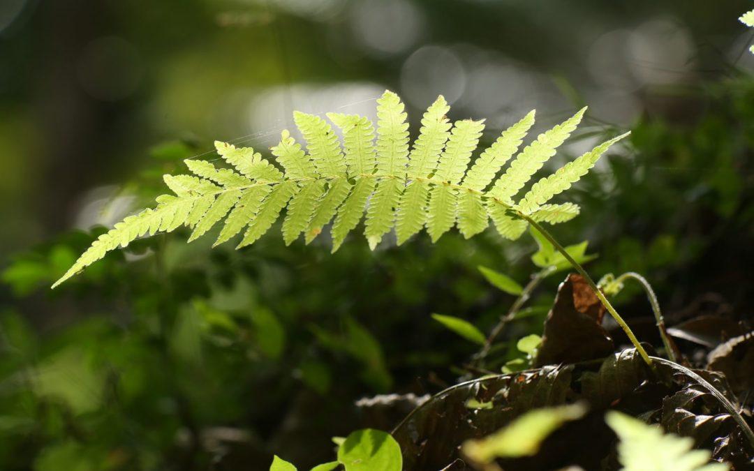 Une forêt jardin, mais qu'est-ce donc exactement, et pour quoi faire… ?