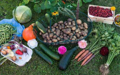 Agence Jardinière Locale : retour sur un premier semestre chargé en activités…
